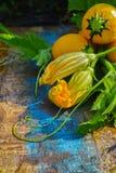 圆的黄色夏南瓜和夏南瓜花,新鲜在庭院里, 免版税库存照片
