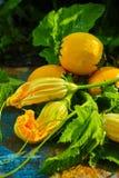 圆的黄色夏南瓜和夏南瓜花,新鲜在庭院里, 库存图片