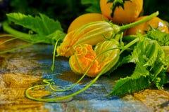圆的黄色夏南瓜和夏南瓜花,新鲜在庭院里, 免版税库存图片