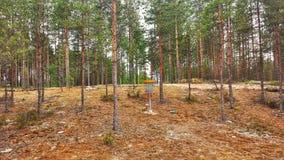 圆盘高尔夫球在森林里 免版税图库摄影
