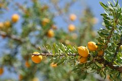 圆筒芯的灯树果子  免版税库存图片