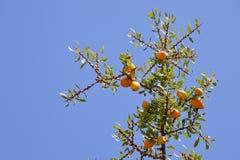 圆筒芯的灯树果子  库存图片