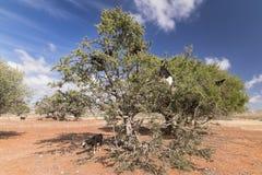 圆筒芯的灯树 免版税库存照片