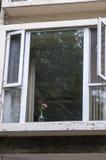 圆花窗 图库摄影