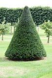 圆锥形结构树 库存照片