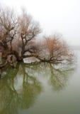 圆鼓的结构树水 库存照片