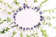圈子与紫罗兰色领域花的形状框架 库存图片