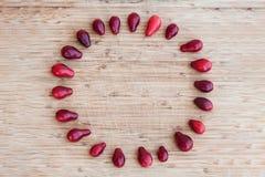 圈子由欧洲红瑞木豆做了 库存照片