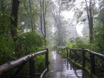 土井intanon的清迈雨林 免版税库存图片