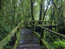 土井intanon的清迈雨林 库存图片