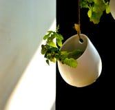 土制罐的一棵植物 免版税图库摄影