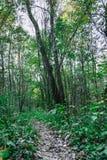 土制足迹在秋天绿色森林里 库存图片
