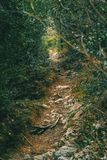 土和石头道路在山中间 图库摄影
