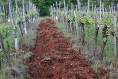 土地德罗萨土壤的,在春天的红色土壤葡萄园 图库摄影