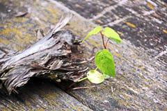 土地的特写镜头视图在用具球果针,杉木锥体,分支,绿色青苔,树皮层数盖的森林里  库存图片