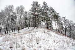 土墩在冬天,立陶宛 库存图片