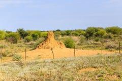 土墩纳米比亚白蚁 免版税库存图片