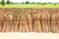 稻土壤侵蚀 免版税库存图片