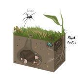 土壤向量图形图  免版税库存图片