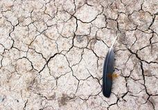 土壤和羽毛和蜻蜓 免版税库存照片