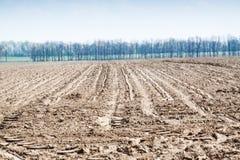 土壤是肥沃植物很好增长 免版税库存照片