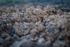 土壤是自然黏土矿物自然地是许多种类吹田 免版税库存图片