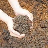 土壤极少数 图库摄影