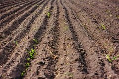 黑土壤犁了领域 地球纹理 免版税库存照片