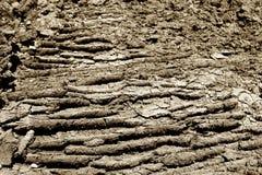 土壤纹理背景 免版税库存图片