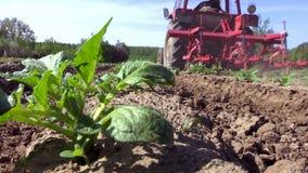 土壤耕种由拖拉机的庄稼土豆 影视素材