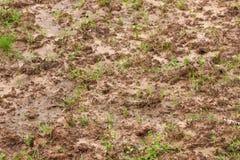 土壤 图库摄影