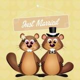 土拨鼠婚礼  库存图片