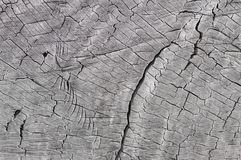 土气灰色木纹理,背景 库存图片