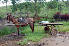 土气的拉货车的马 免版税库存照片