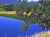 土气的池 库存照片