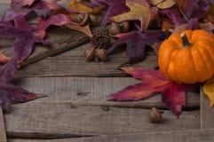 土气秋天设置用微型南瓜 免版税图库摄影