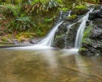 土气秋天, Moran国家公园, WA 免版税库存照片