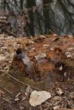 从土气管子的水 库存图片