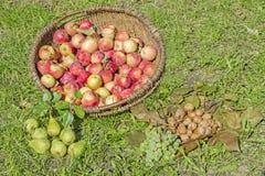 土气篮子用秋天果子 库存图片