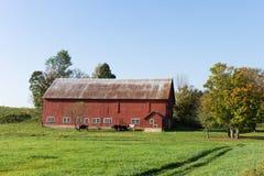 土气红色谷仓和奶牛 免版税图库摄影