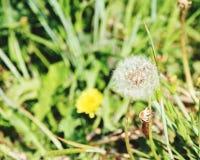 土气自然秀丽 免版税库存图片