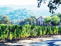 土气葡萄园在纳帕谷 库存照片