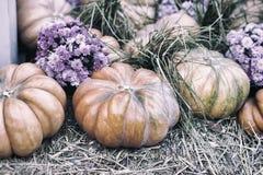 土气葡萄酒背景用在干燥秸杆和秋天的有机南瓜开花 收获概念 假日的标志 免版税库存照片
