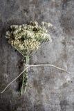 土气金属背景的草本植物 免版税库存照片