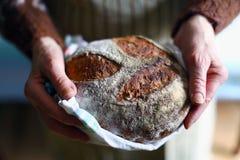 土气整粒酸面团,拿着新鲜的大面包的手 库存照片