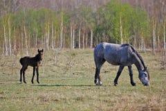 土气绘画,马在草甸 库存图片