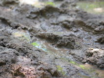 土湿路 库存照片