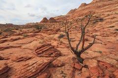 土狼小山北部自然保护区风景  免版税图库摄影