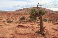 土狼小山北部自然保护区风景  库存照片