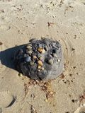 黑黏土球 库存图片